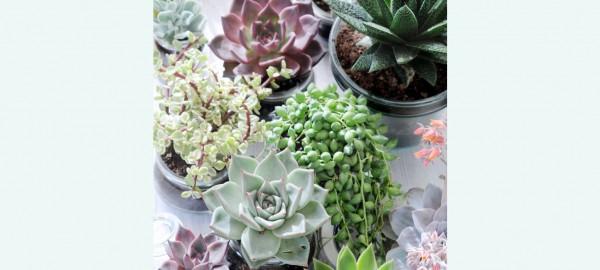 Ontwerp je eigen plantenbakje