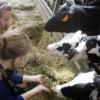 Dieren knuffelen en verzorgen